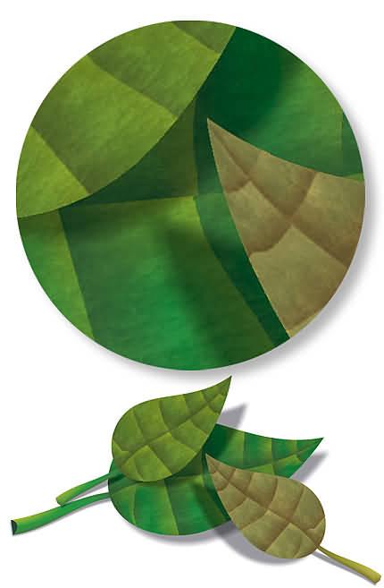 Frunze (desen vectorial de Florinf)